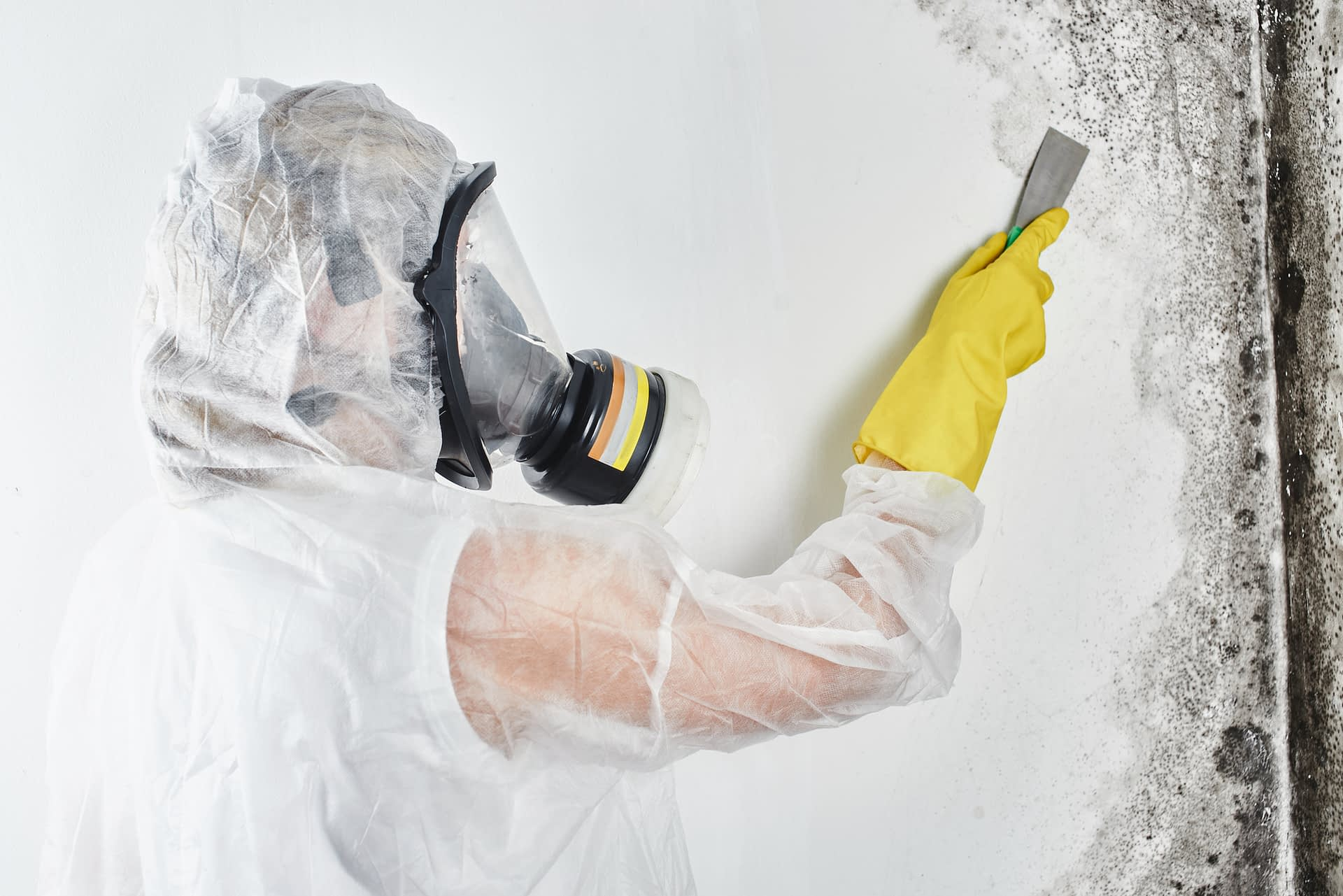 mold removal lead generation