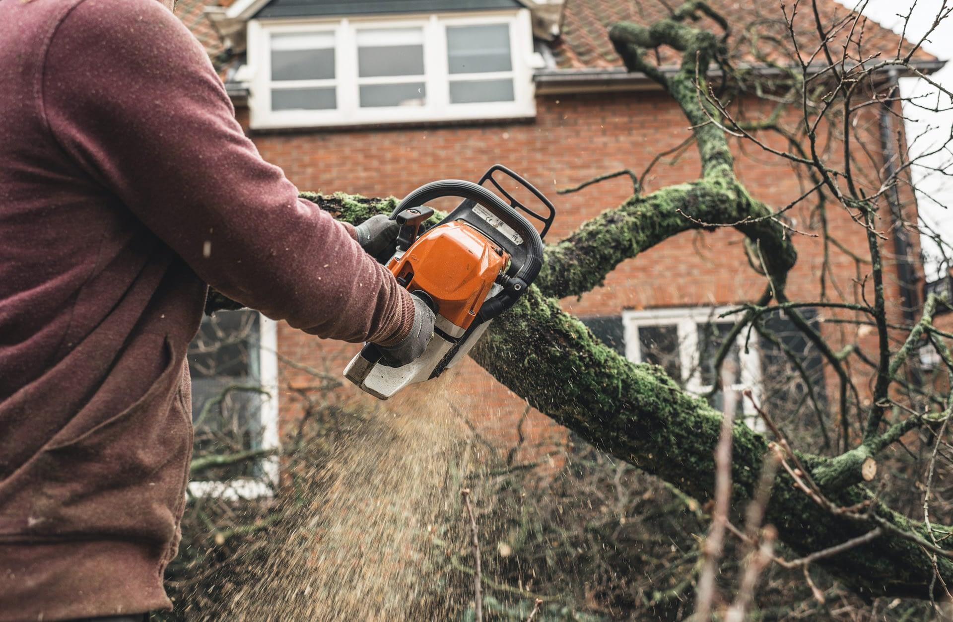 tree service leads